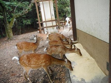 杉之浦神社6-2