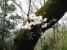 弘法山の桜