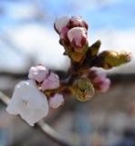 開花 (1)