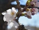開花 (2)