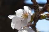 開花 (3)
