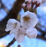 開花 (5)