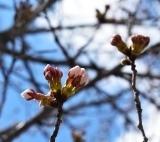 開花 (8)