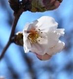 開花 (9)
