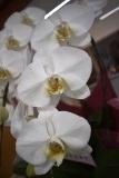 花届く (1)