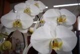 花届く (2)