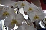 花届く (3)