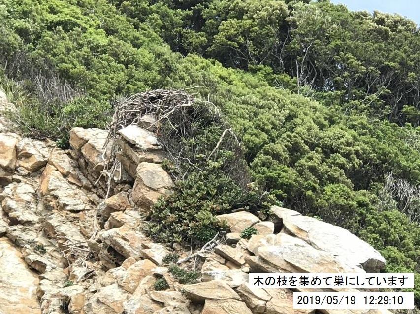 ミサゴの巣があった
