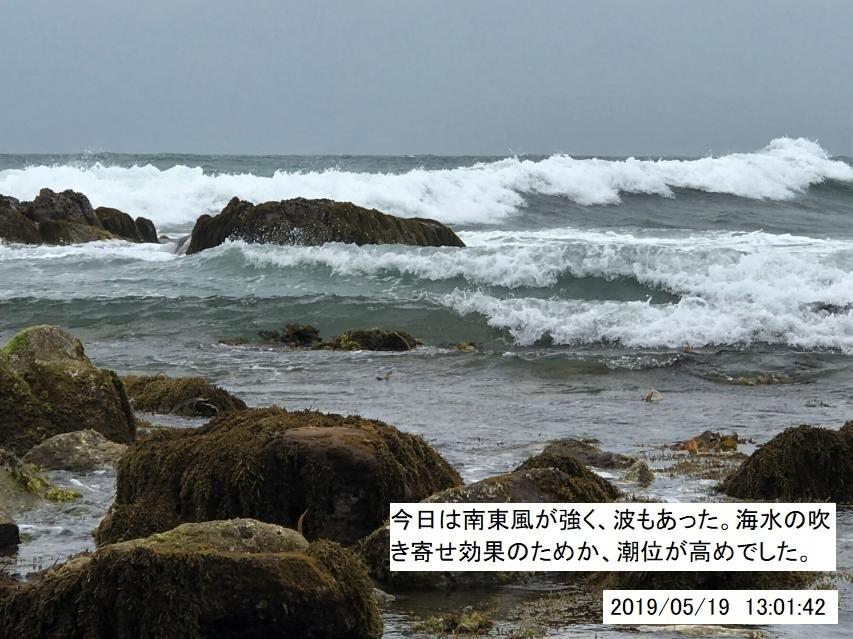 本日は波があり潮位も高く、潮干狩りには条件
