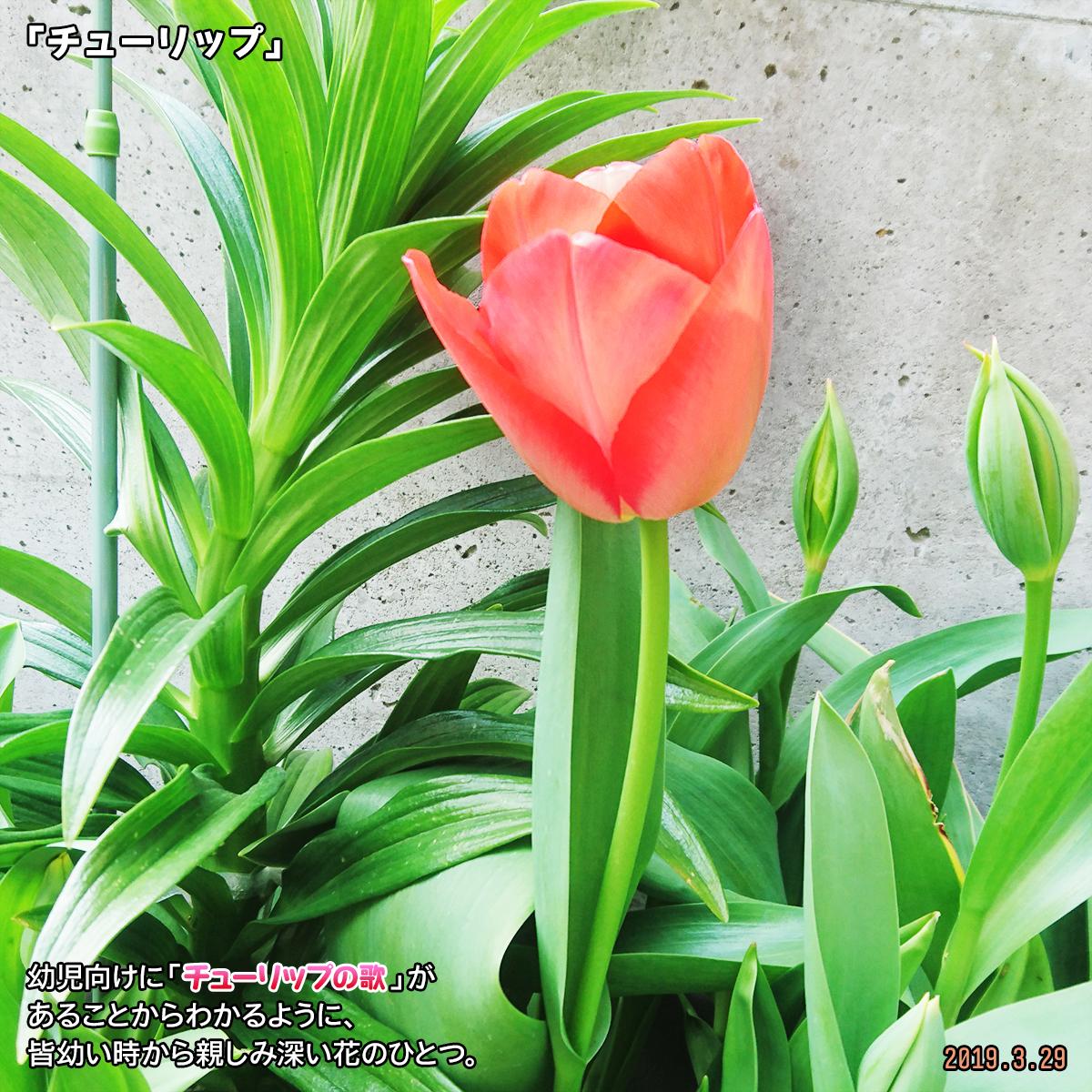 DSC_0141_20190411174416c29.jpg