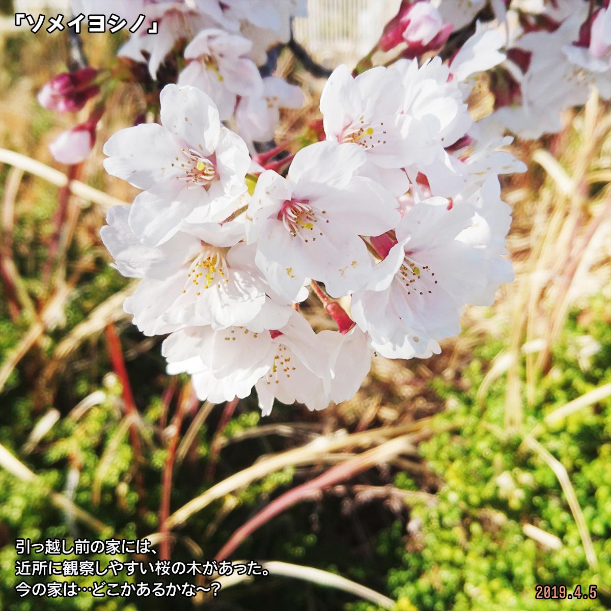 DSC_0223_2019061118304786c.jpg