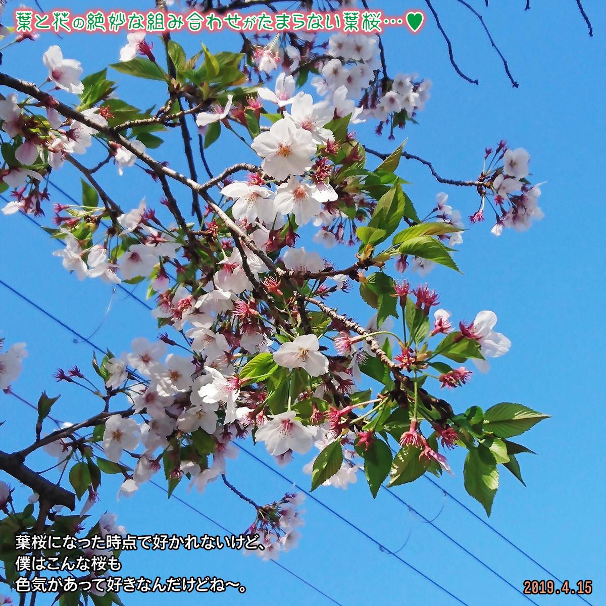 DSC_0308_20190415171136c3d.jpg
