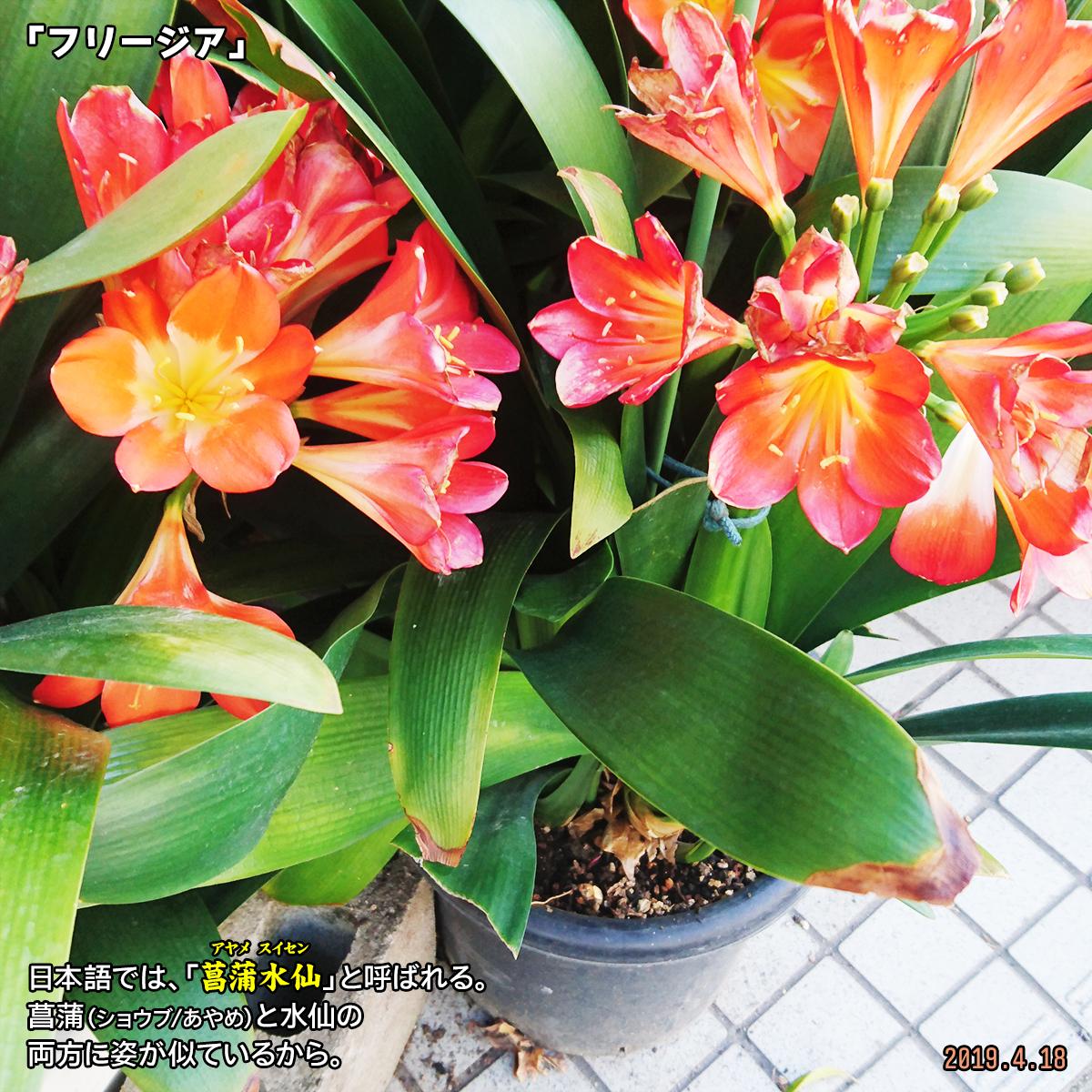 DSC_0360_201904191647579bb.jpg