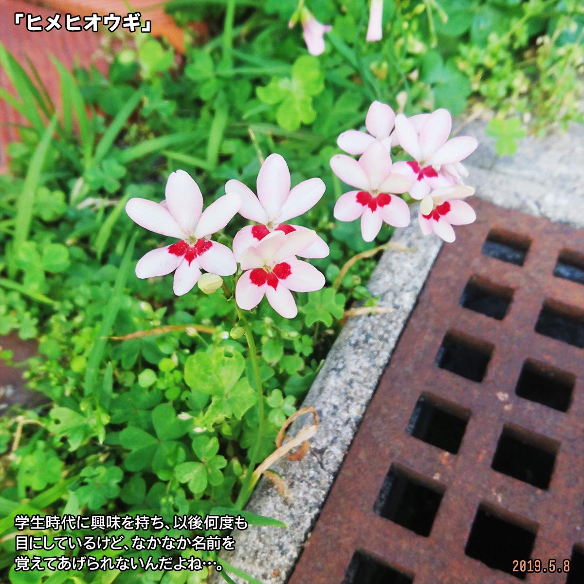 DSC_0540_20190516165929b38.jpg