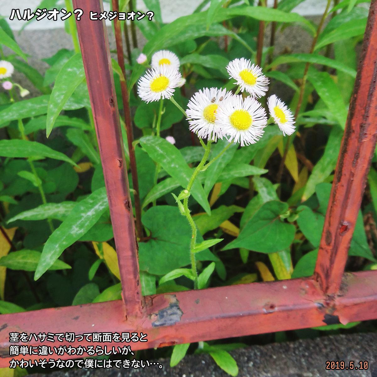 DSC_0567_20190527221607f5a.jpg