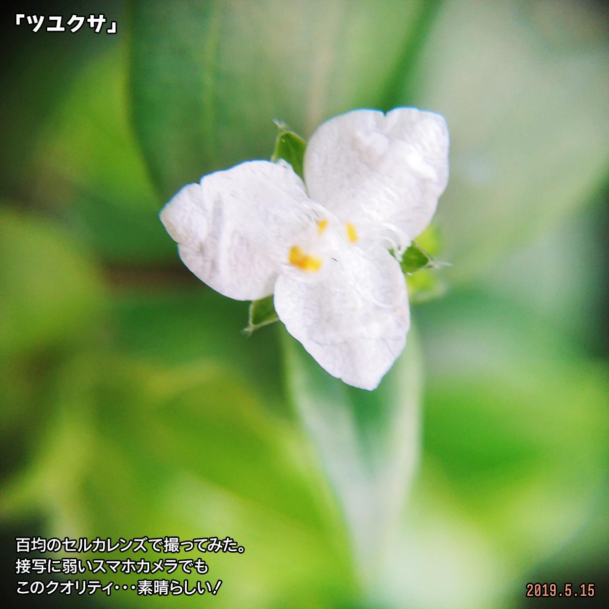 DSC_0600-(1).jpg
