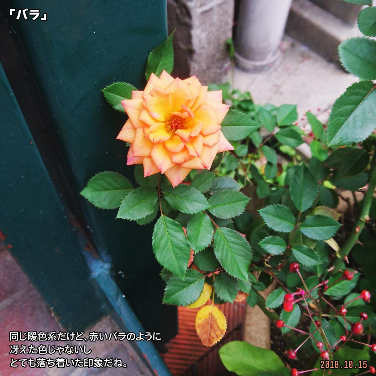 DSC_8414_2_2019031817312982e.jpg
