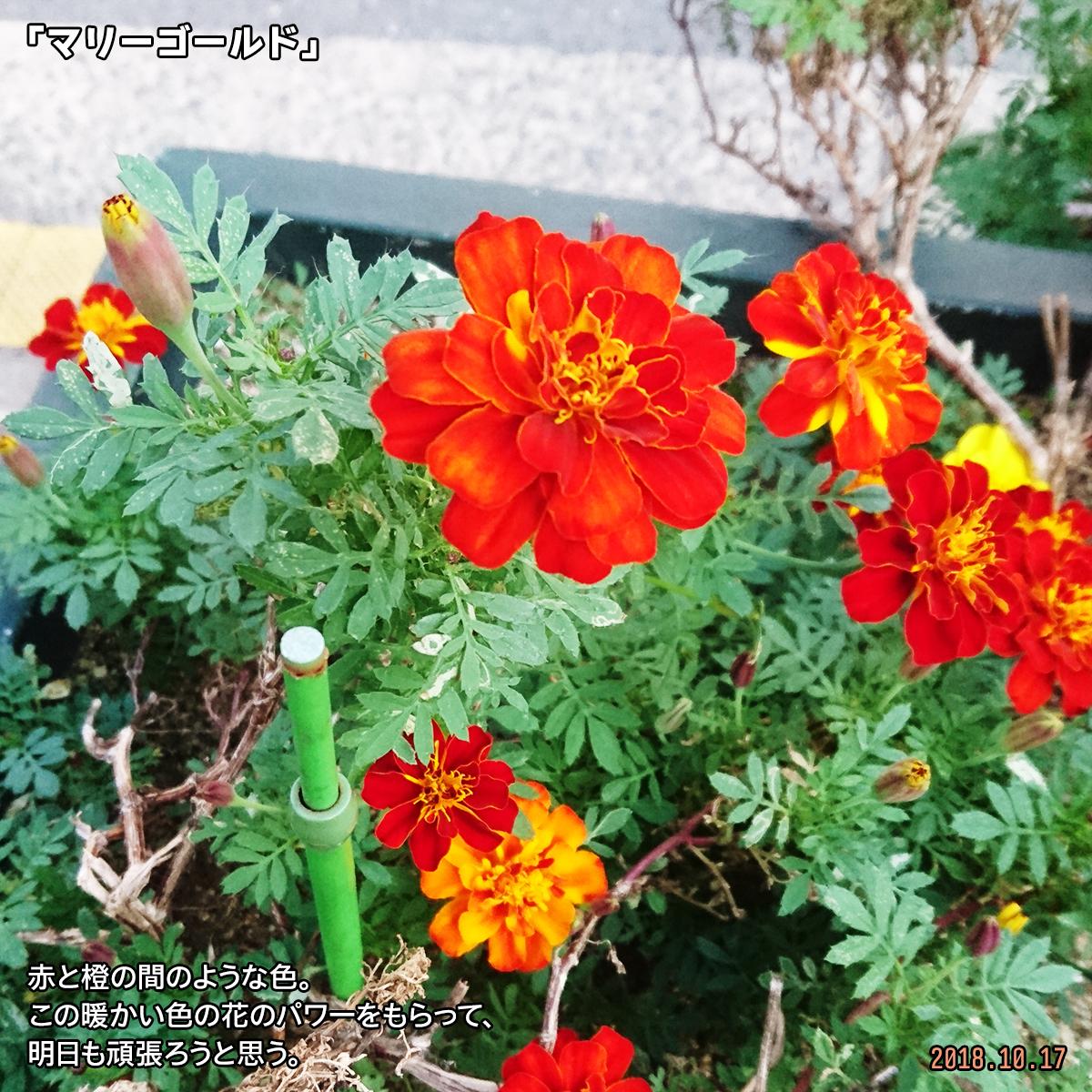 DSC_8448.jpg