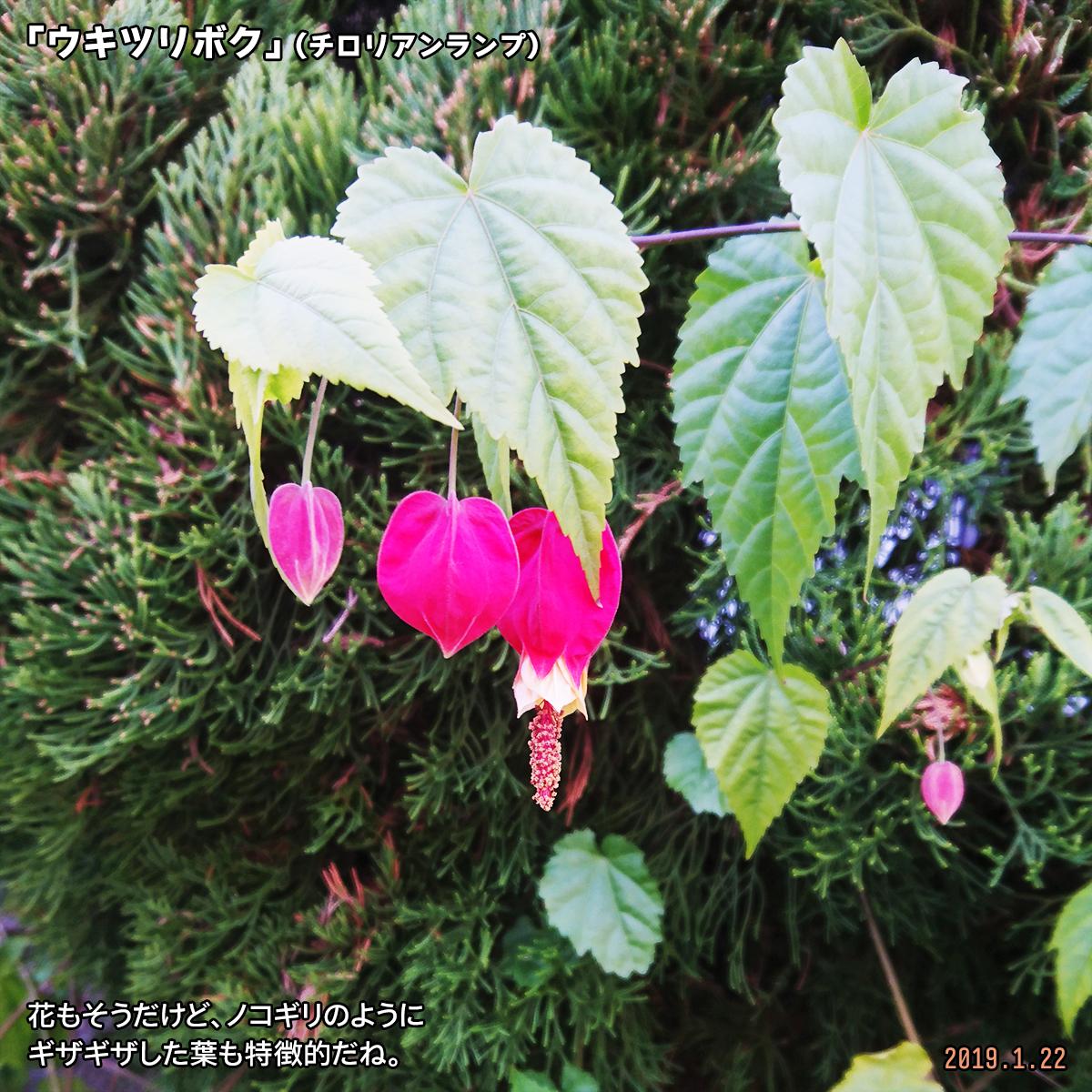 DSC_9400-1.jpg