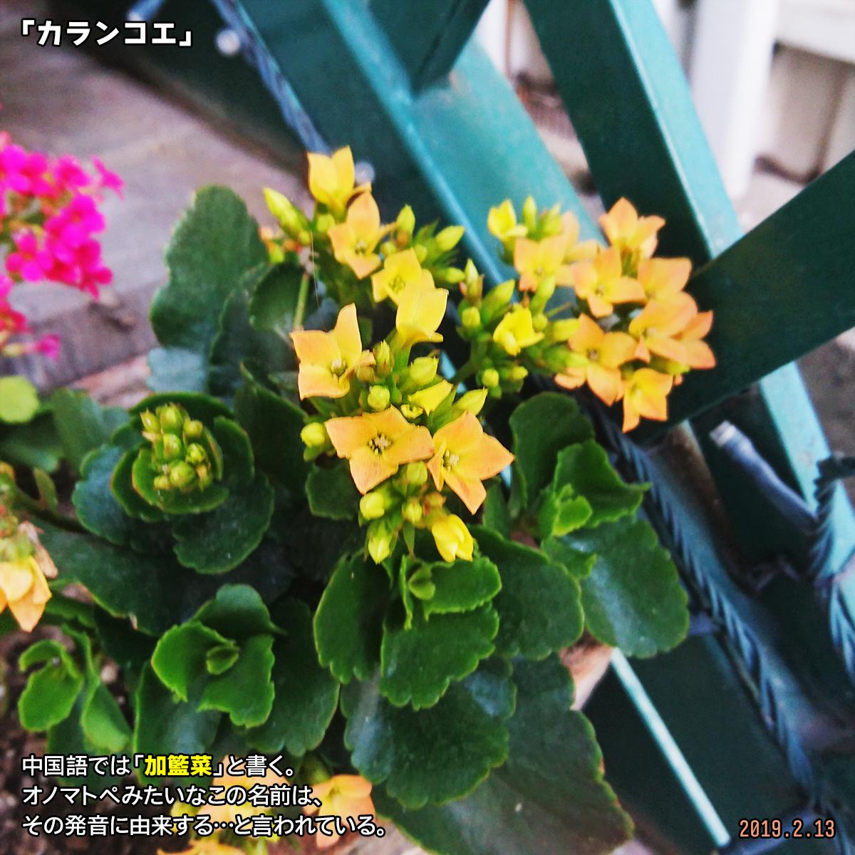 DSC_9698.jpg