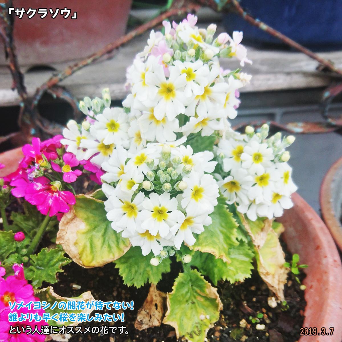 DSC_9883.jpg