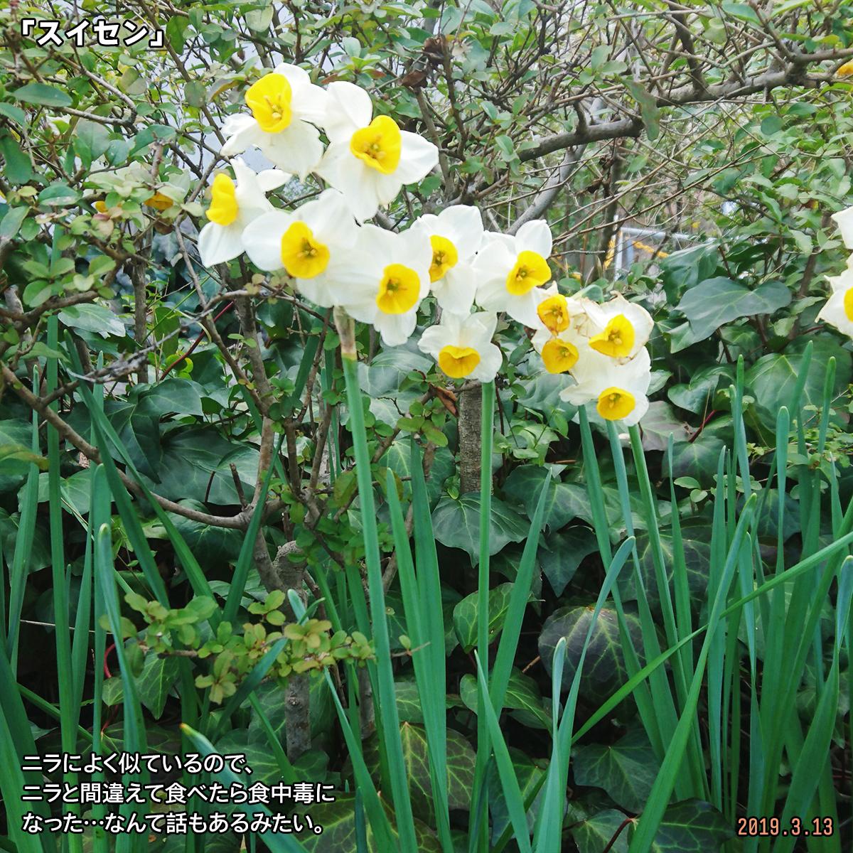 DSC_9940.jpg