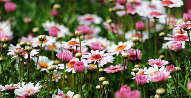 ちち子色のお花