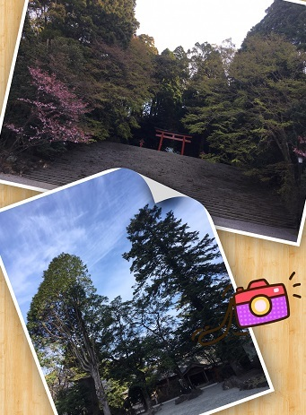 霧島神宮4