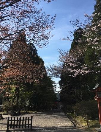霧島神宮7