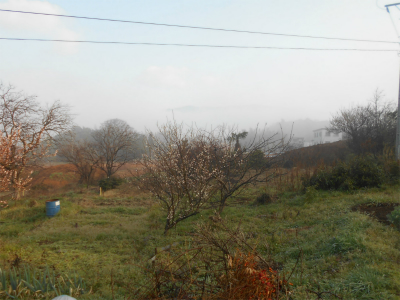 310301霧のかかるそらの畑
