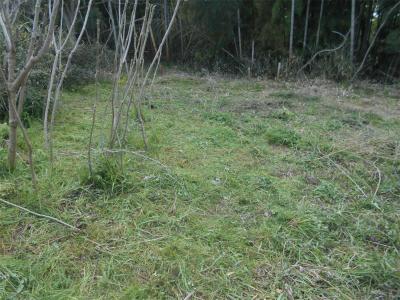 310412筍を期待して草刈