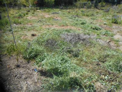 310412空き地の草刈