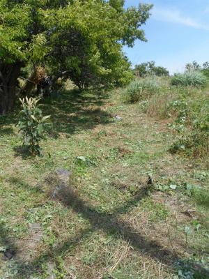 010601草刈り