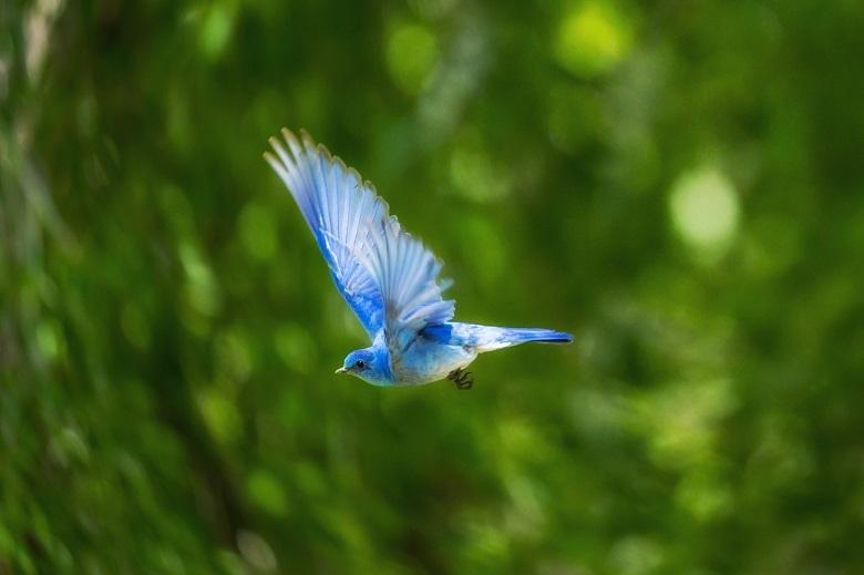 0527-blue-bird-780.jpg