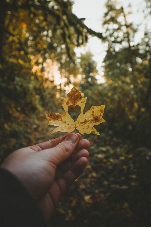 0527-leaf-heart-780.jpg
