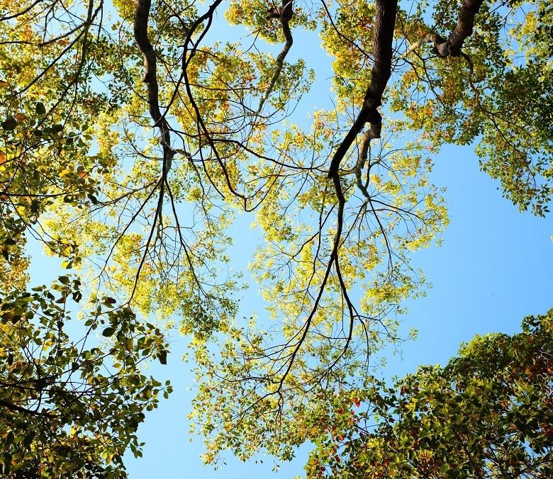 0528-tree-leaves-780.jpg