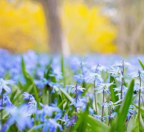 spring flower_bs