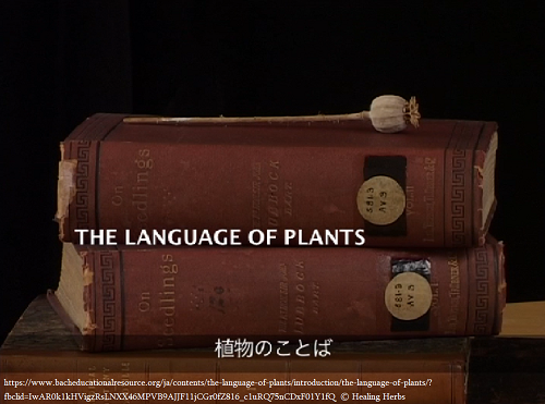 language of plants 500x