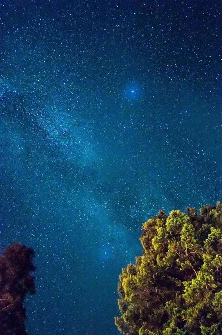 20190524-star-tree-780.jpg