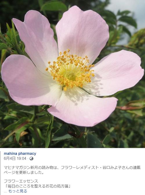 0607_mahina wild rose