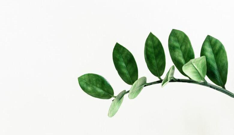 i-am-a-plant-780x450.jpg