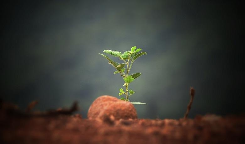i-am-a-plant-image-781x459.jpg