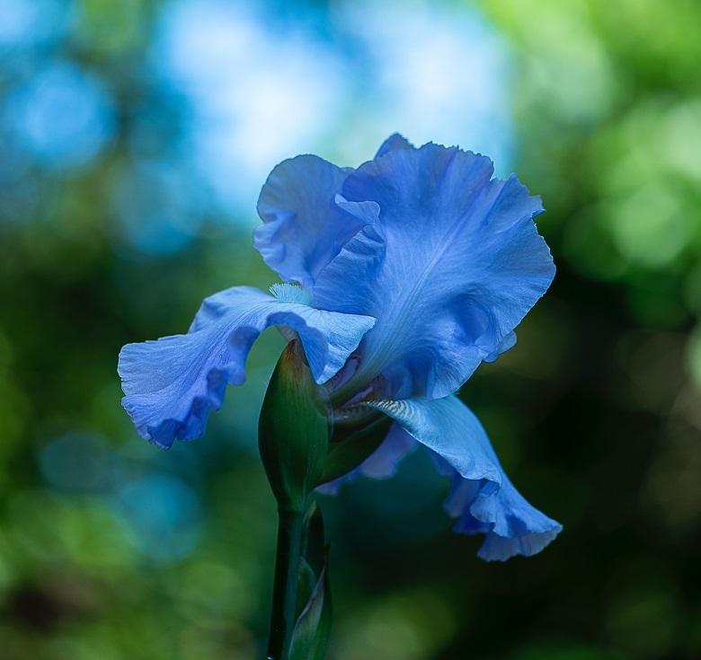 may-flower.jpg