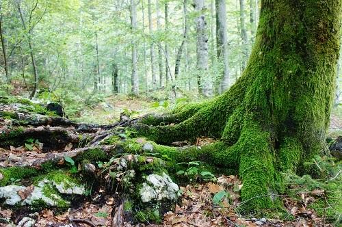 tree-moss-500x.jpg