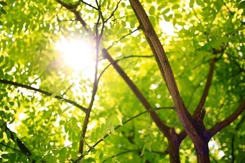 tree-sunlight-500x.jpg