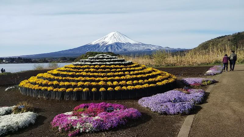 花富士と富士山201904
