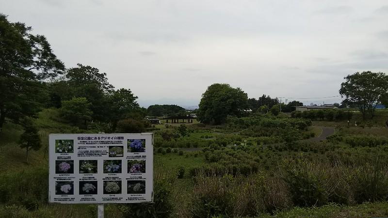 道の駅赤城の恵アジサイの丘中腹201905