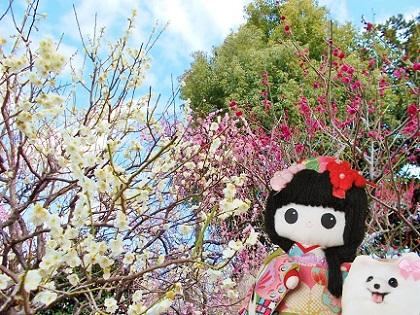 綺麗な梅のアンサンブルです