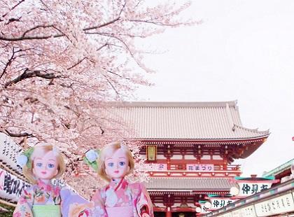 桜の浅草寺です1