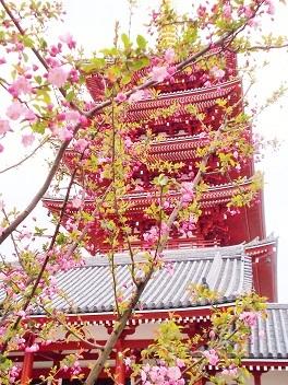 浅草寺 五重塔とカイドウ